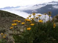 Vuoristokasvillisuutta. Kuva: AHA-Erlebnisse, Davos