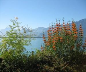 Rantakadun kukkaloistoa